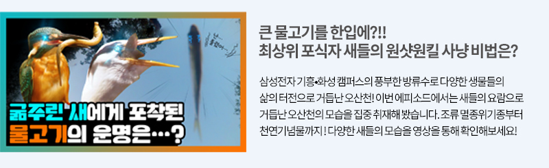 오산천의 최상위 포식자 이야기